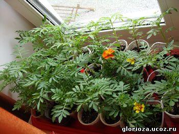 Экзотические растения фото трафарет